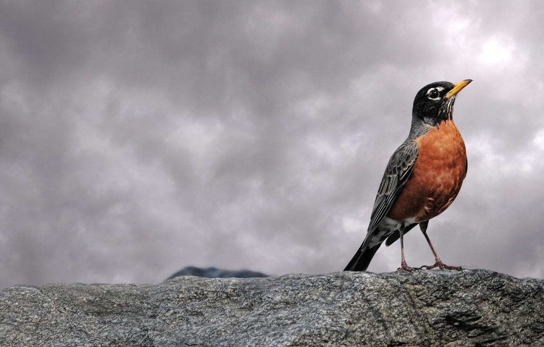 Photo wallpaper clouds, bird, stone, 153