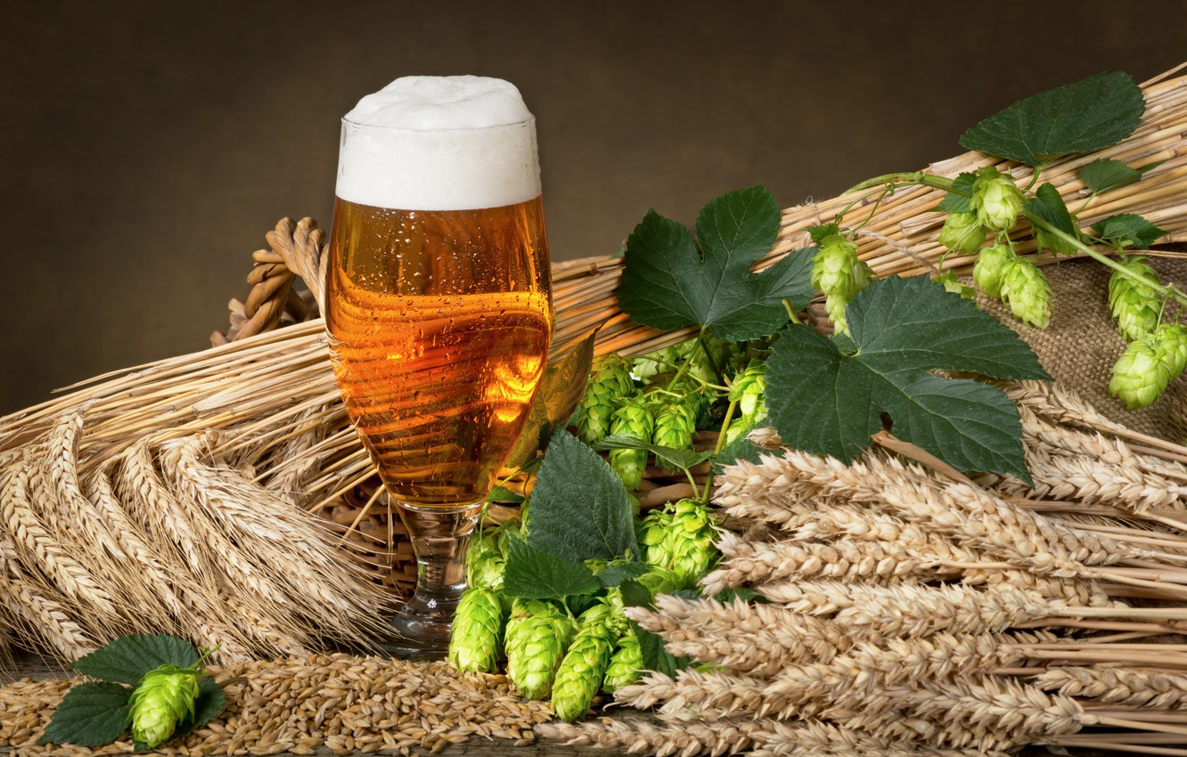 Wallpaper Glass Beer Ears Millet Foam Hops Images For Desktop
