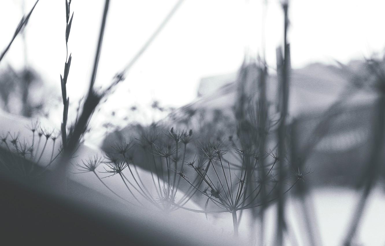 Photo wallpaper winter, macro, snow, nature, blur, wallpaper