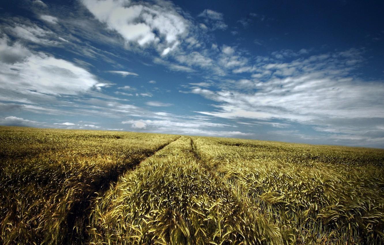 Photo wallpaper road, field, summer, the sky