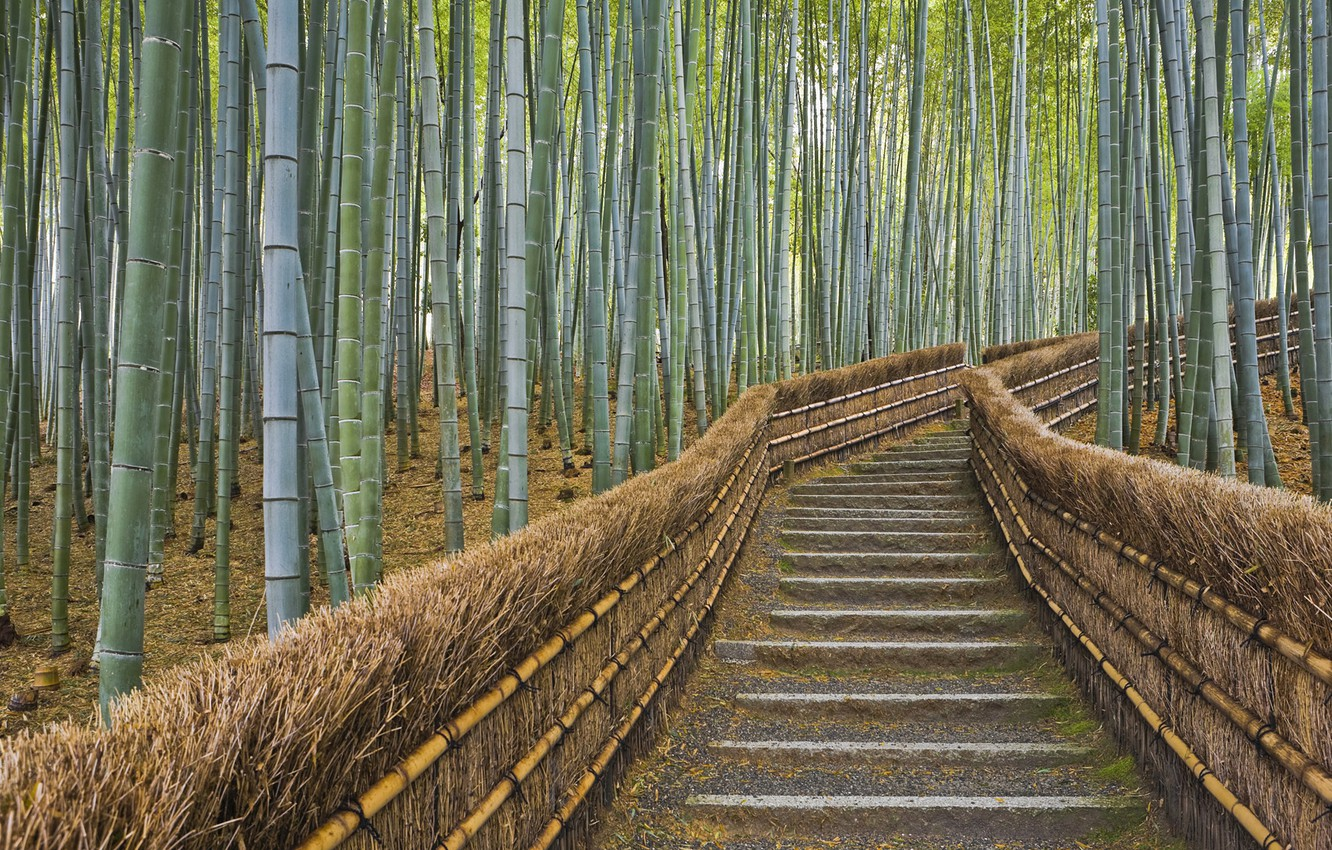 Photo wallpaper fence, bamboo, Japan, Kyoto, path