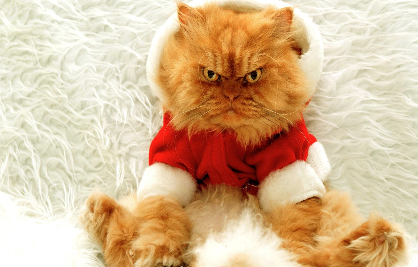 Photo wallpaper cat, large, red, New year, evil