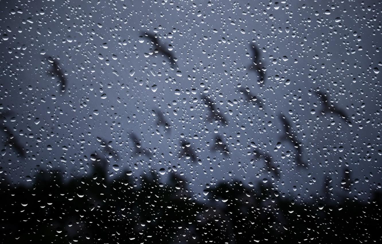 Photo wallpaper glass, drops, night, rain, window, rain drops on glass