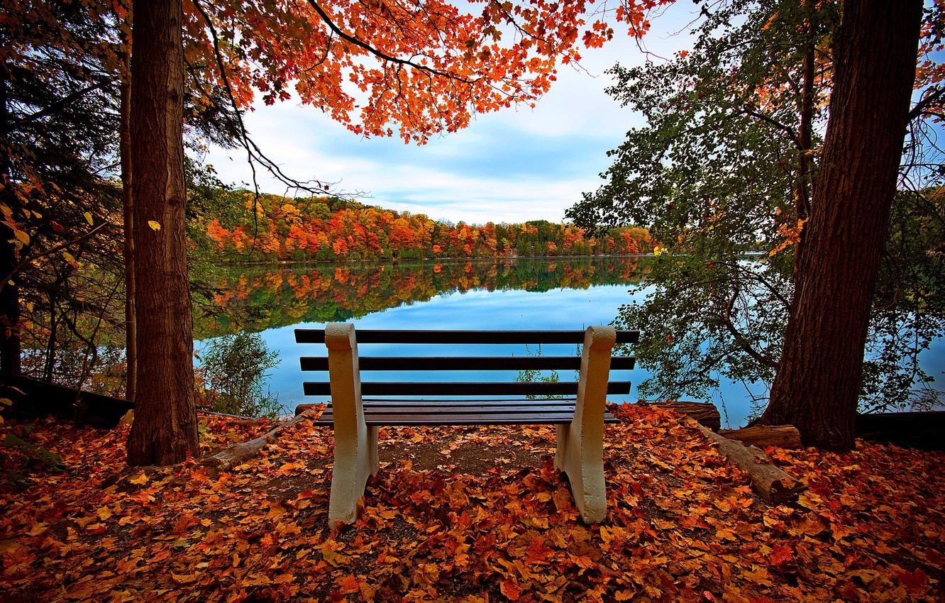 Photo wallpaper autumn, forest, the sky, leaves, water, trees, bench, nature, reflection, river, view, hdr, walk, forest, …
