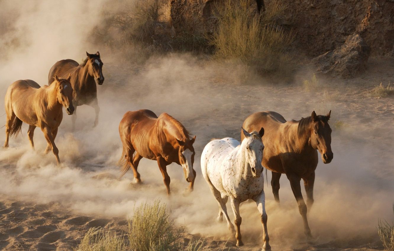 Photo wallpaper animals, photo, horses, dust, horse, wildlife, the herd, the herd