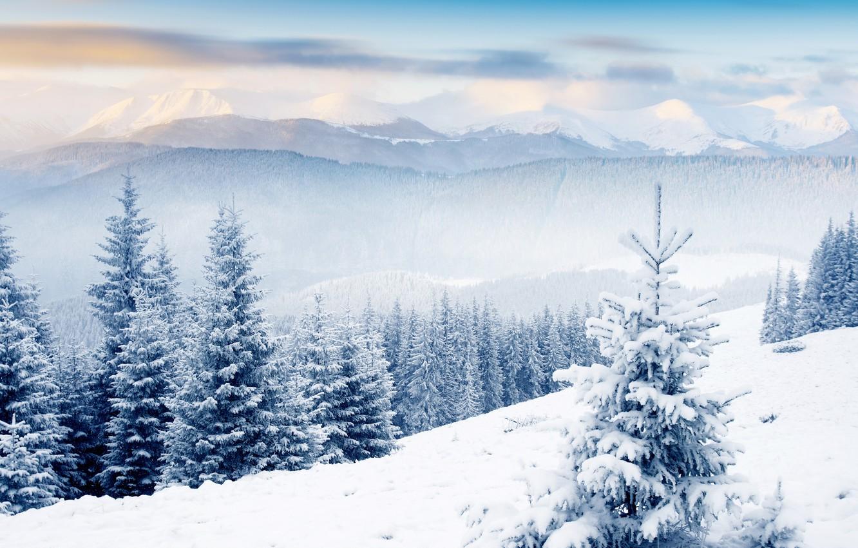 Photo wallpaper winter, forest, clouds, hills, tree, hills