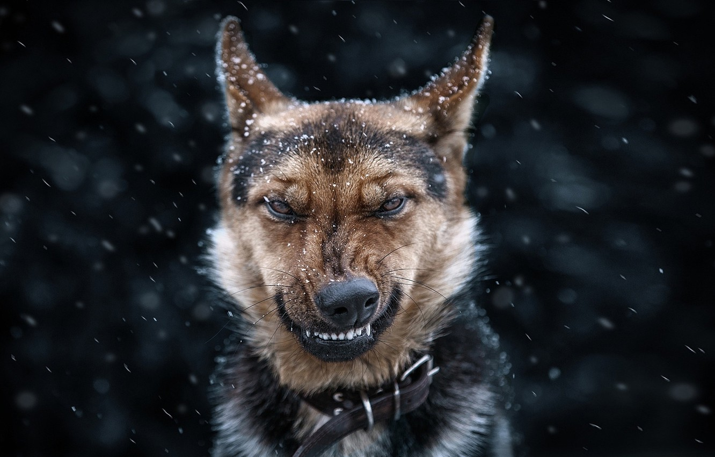 Photo wallpaper eyes, dog, face
