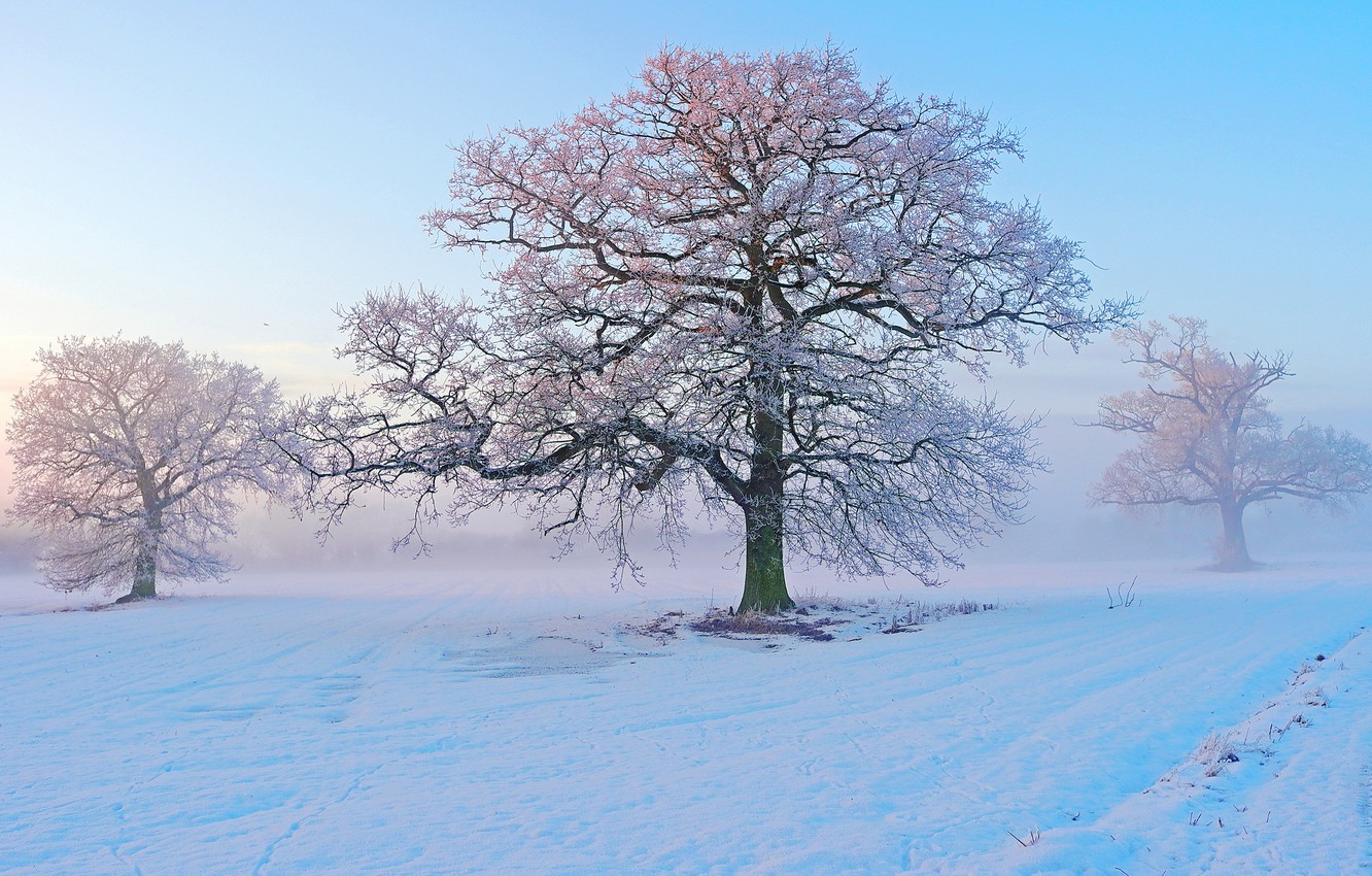 Photo wallpaper winter, frost, snow, trees, fog, morning, frost