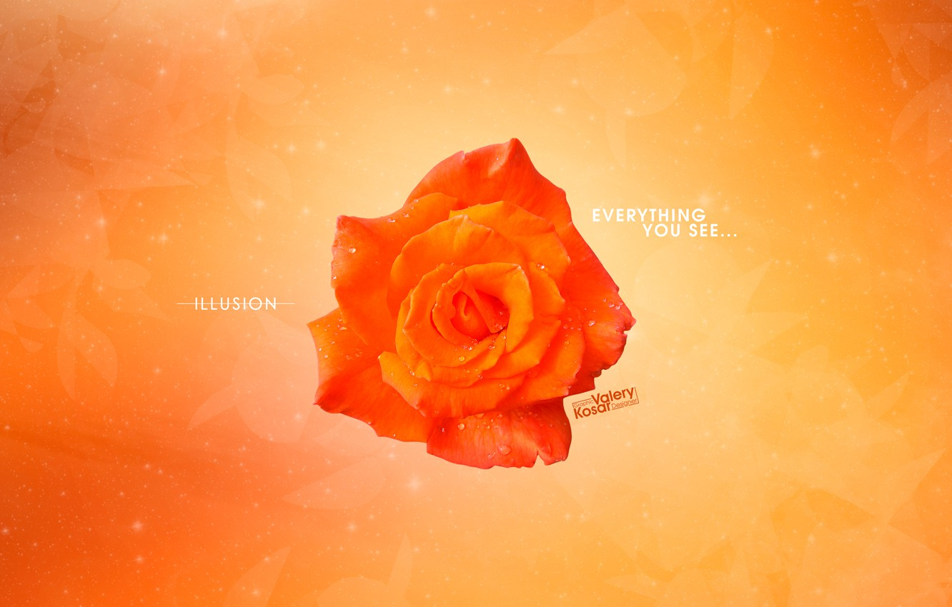 Photo wallpaper flowers, orange, abstraction, rose