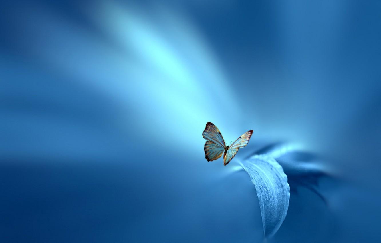 Photo wallpaper flower, sheet, style, background, blue, butterfly, Josep Sumalla