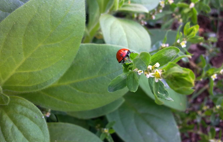 Photo wallpaper greens, grass, flowers, ladybug