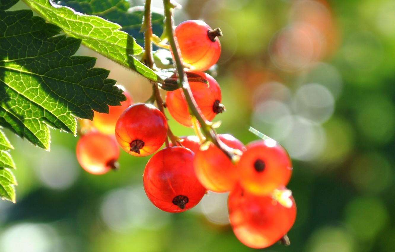 Photo wallpaper summer, nature, berries, currants
