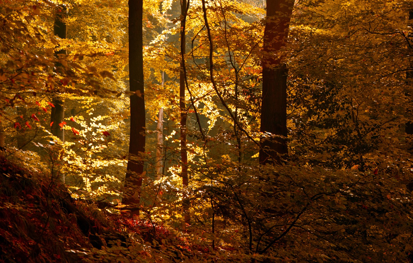 Photo wallpaper autumn, forest, leaves, the sun, thicket