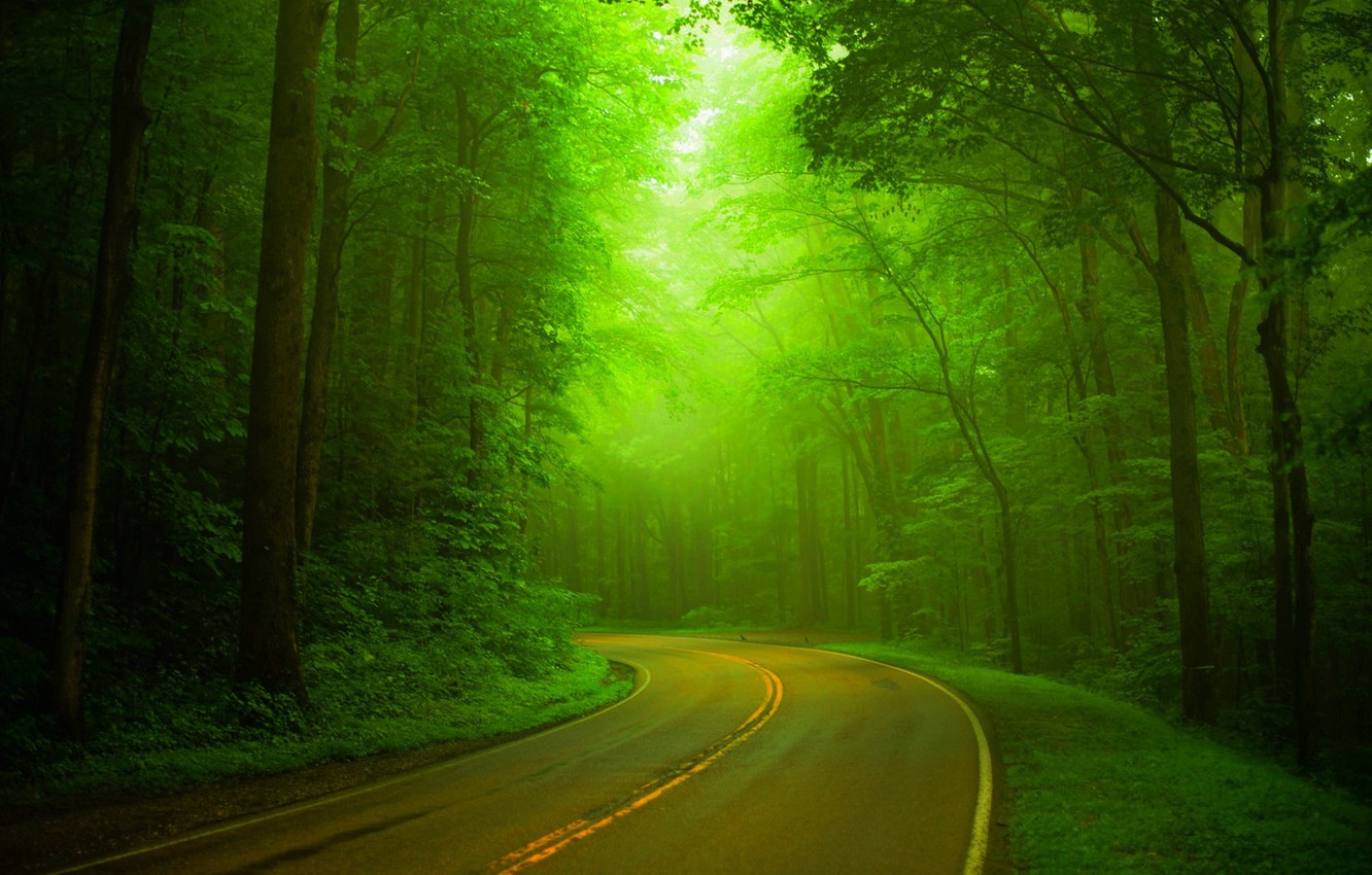 Photo wallpaper road, forest, trees, nature, Park, spring, forest, road, trees, nature, park, spring, walk, path