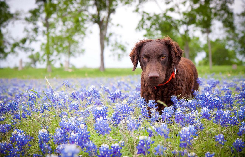 Photo wallpaper flowers, nature, dog