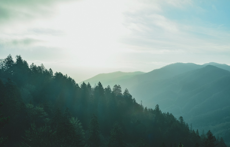 Photo wallpaper trees, mountains, hills