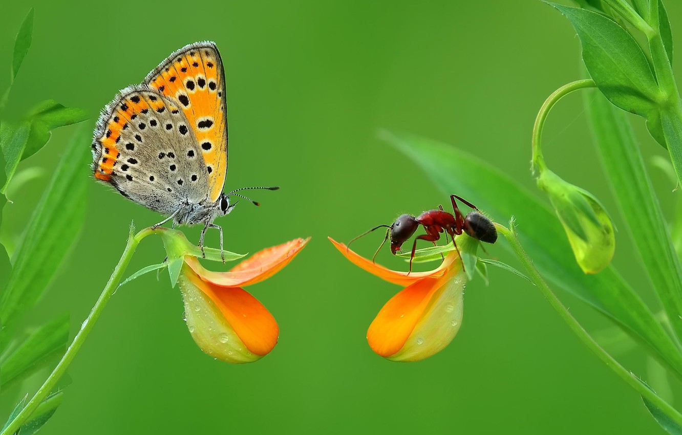 Photo wallpaper grass, macro, butterfly, insect, Moores