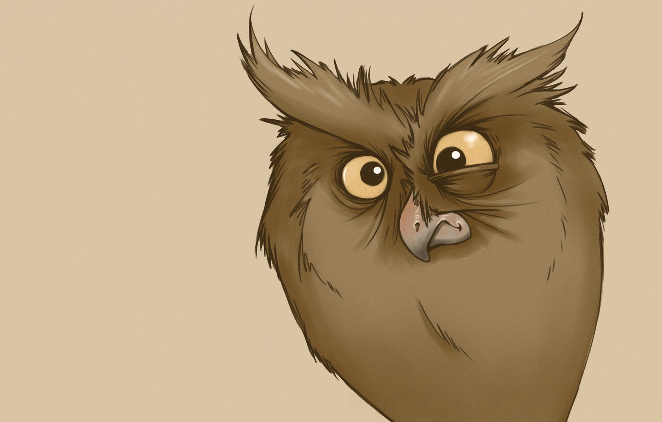 Photo wallpaper owl, minimalism, owl, funny look