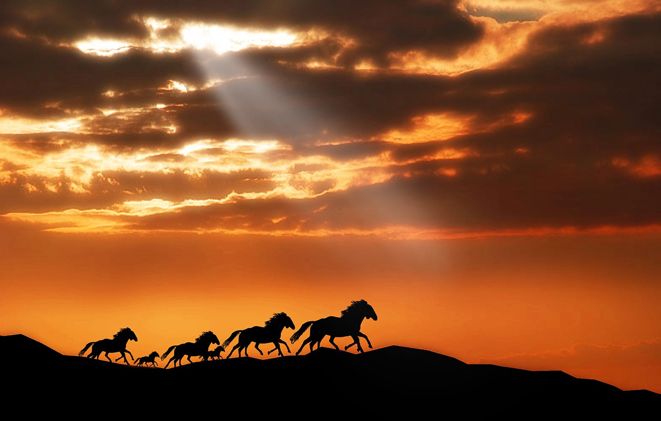 Photo wallpaper animals, the sky, the sun, clouds, rays, light, sunset, mountains, horse, horse, horse, pony, the …