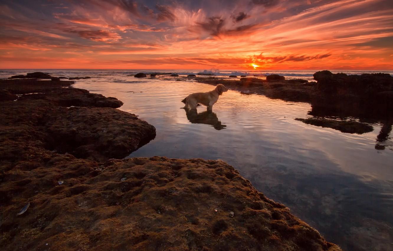Photo wallpaper sea, beach, sunset, dog, waiting