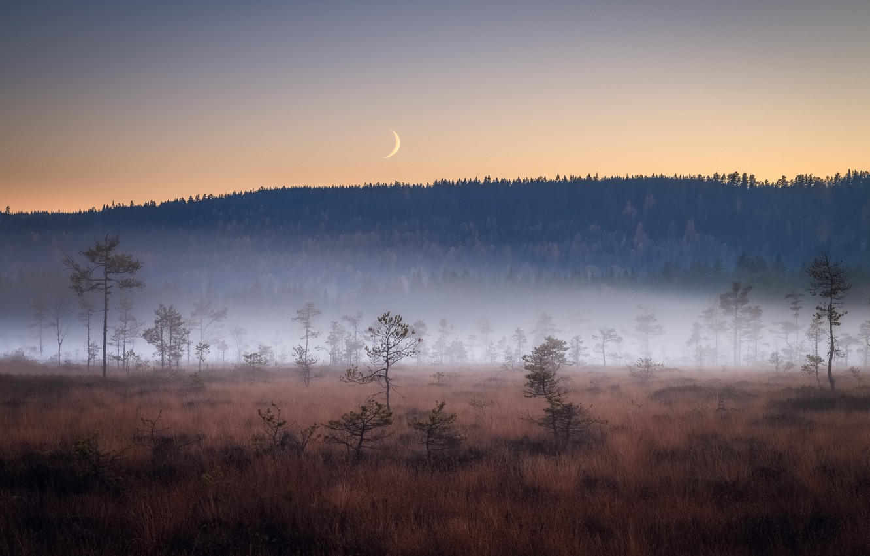 Photo wallpaper field, night, fog, the moon