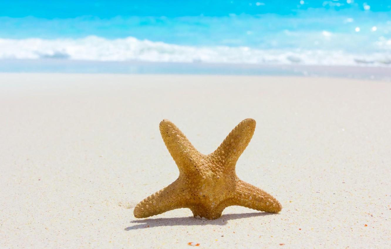 Photo wallpaper sea, beach, summer, nature, summer, beach, sea, nature, sand, starfish
