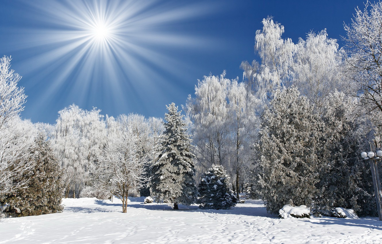 Photo wallpaper winter, frost, forest, the sun, snow, trees, Nature