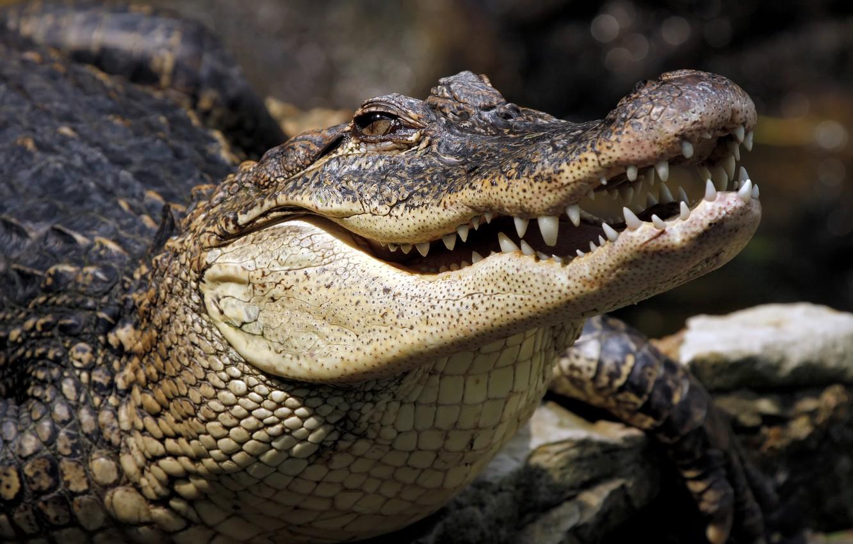 Photo wallpaper lizard, Crocodile, reptile