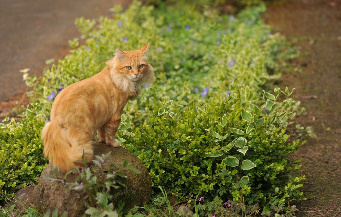Photo wallpaper grass, cat, flowers, stone, red