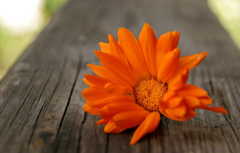 Photo wallpaper flower, orange, tree, petals