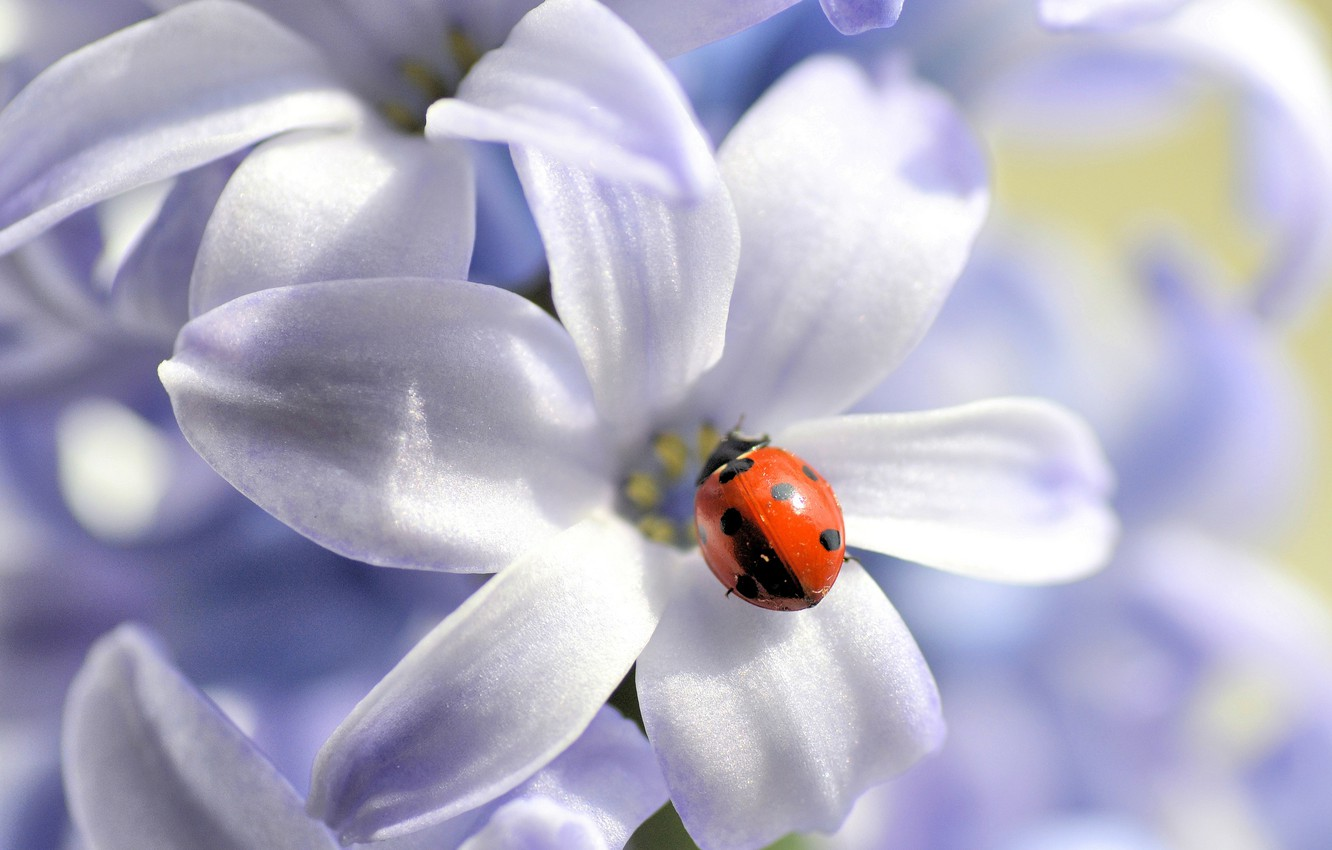 Photo wallpaper flower, nature, ladybug, petals, insect