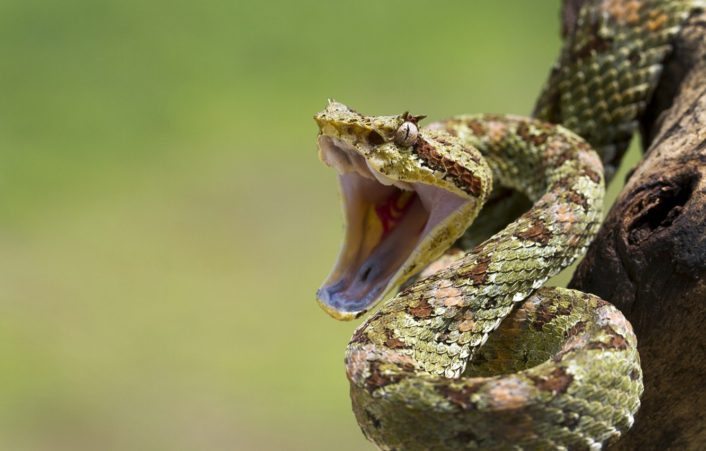 Photo wallpaper eye, branch, snakes, mouth, reptile