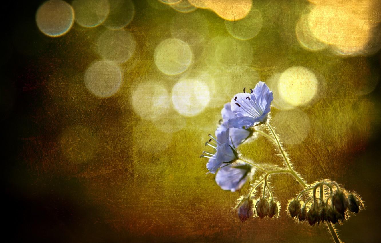Photo wallpaper flower, style, background