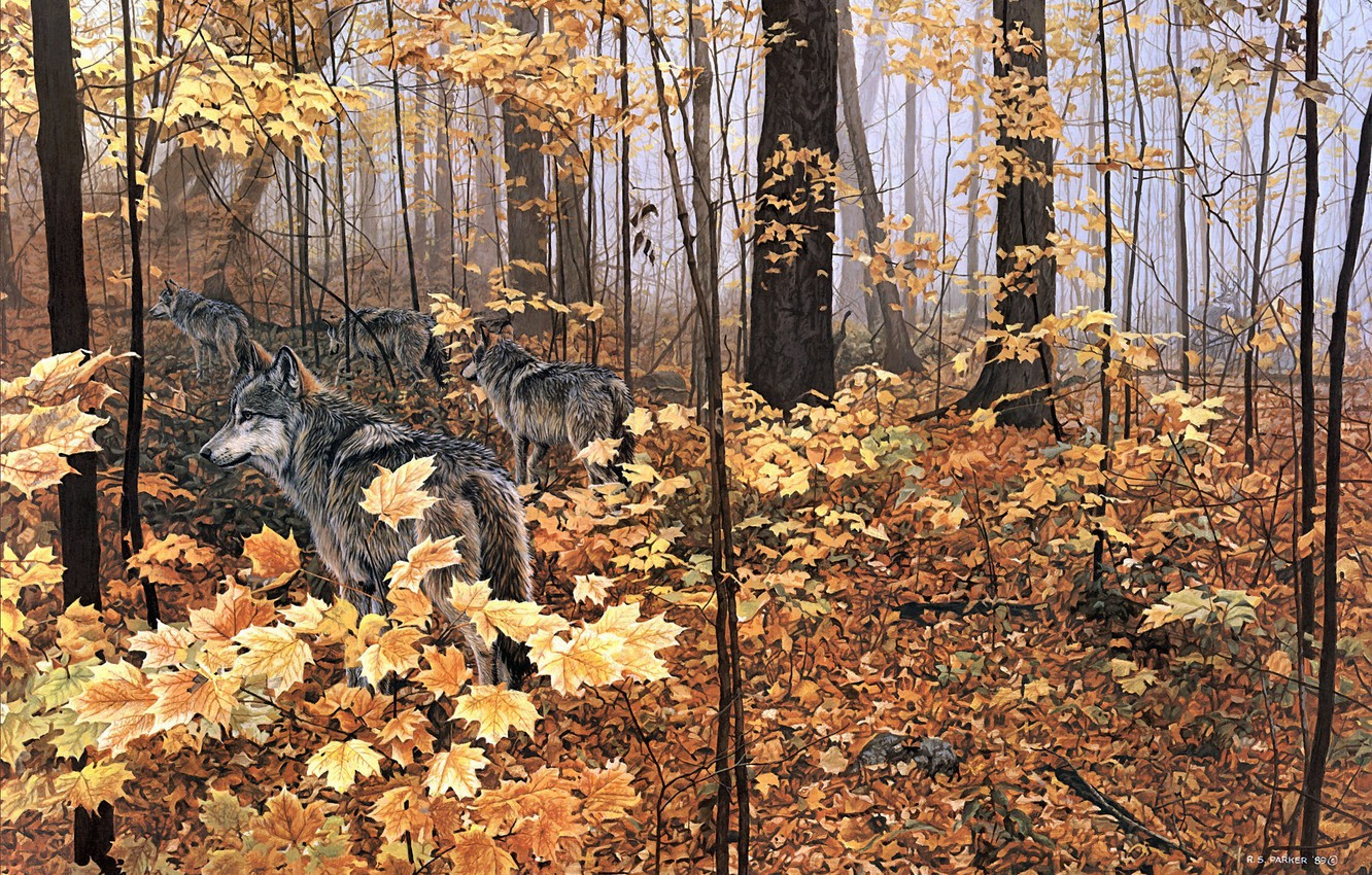 Photo wallpaper autumn, forest, animals, nature, yellow leaves, wolves, maple, painting, Autumn Maples, Ron S.Parker