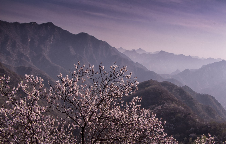 Photo wallpaper landscape, mountains, tree