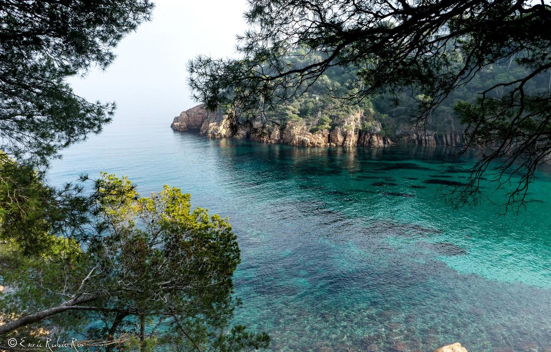 Photo wallpaper sea, trees, branches, rocks, shore, Bay, Spain, Costa Brava, Girona