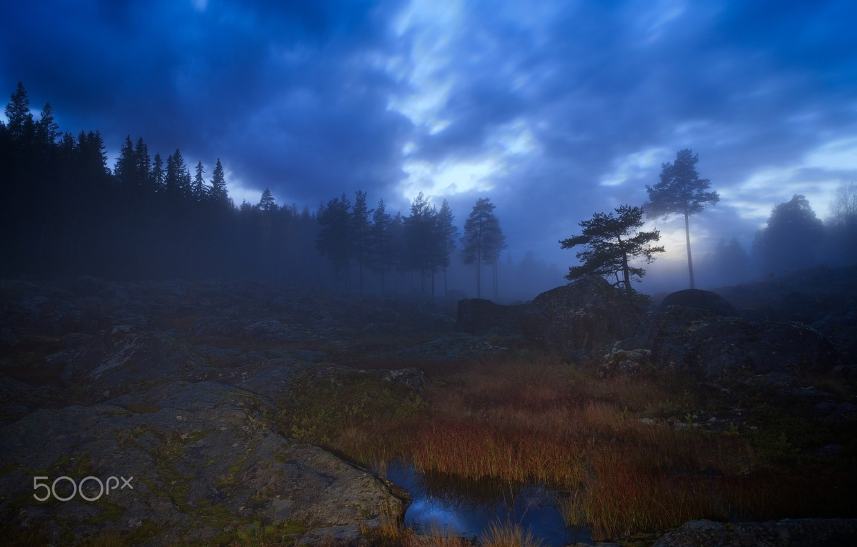 Photo wallpaper trees, nature, fog, the evening, haze