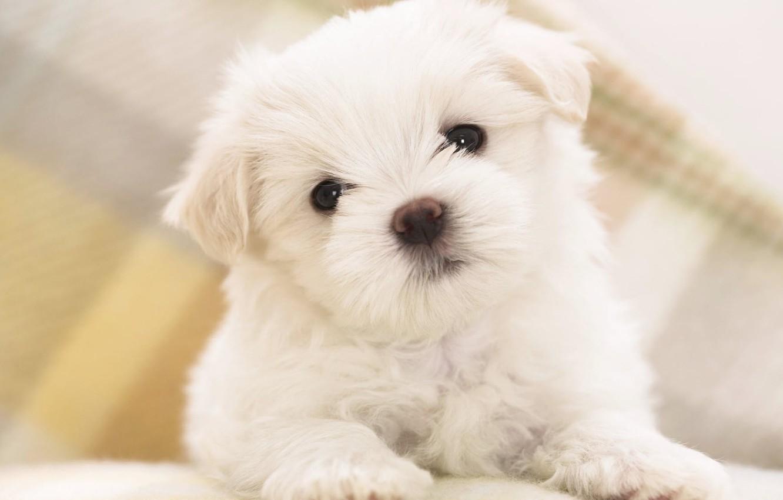 Photo wallpaper Wallpaper, cute, puppy