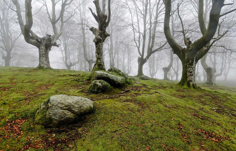 Photo wallpaper forest, nature, fog