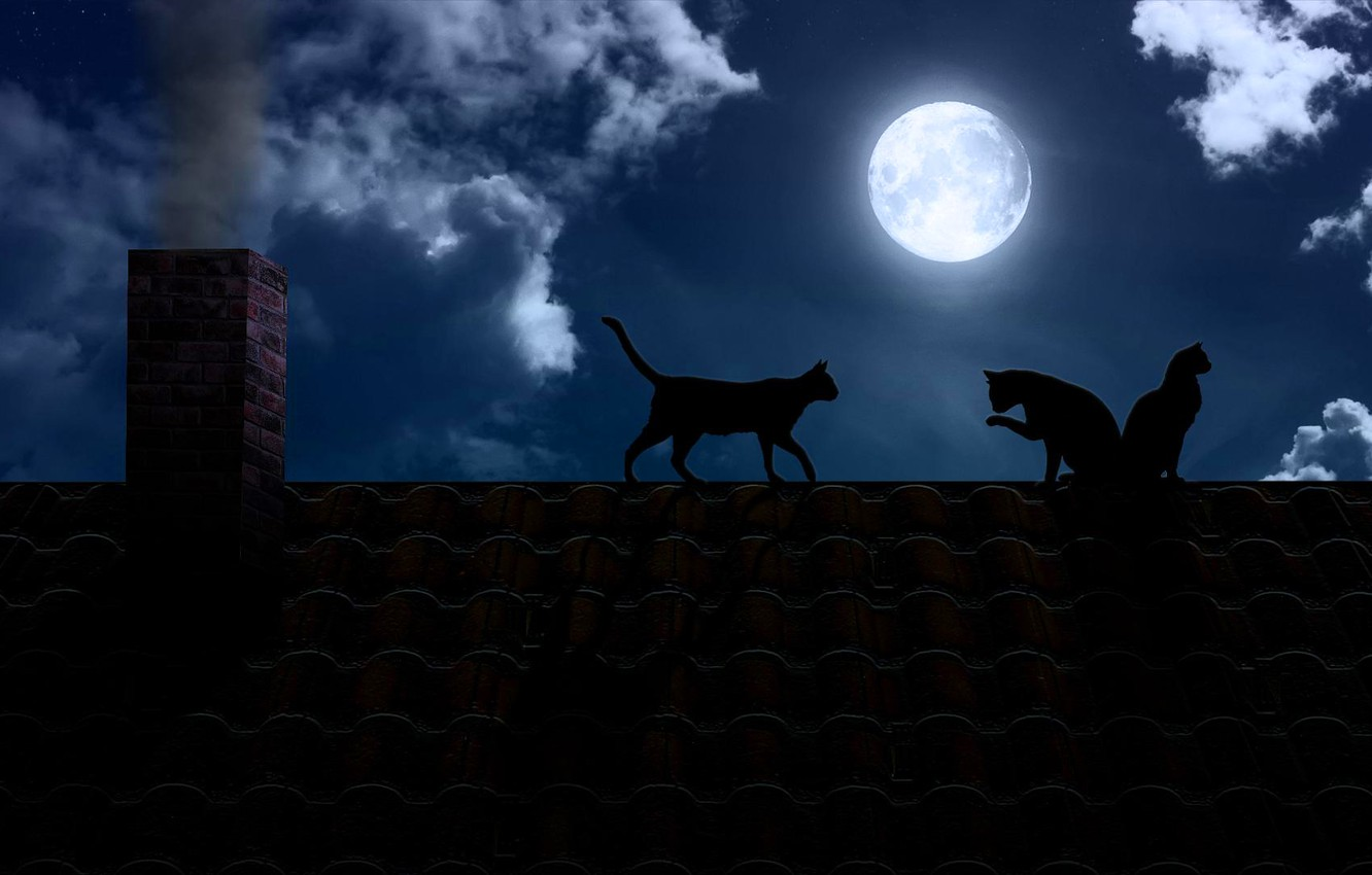 Photo wallpaper roof, cats, night, darkness, the moon, pipe, the full moon, black
