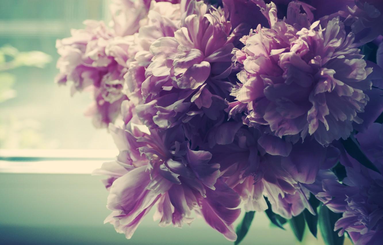 Photo wallpaper morning, petals, Bud, window, peonies
