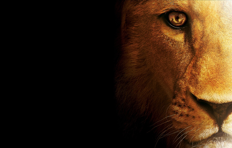 Photo wallpaper cat, predator, Leo, beast