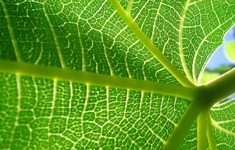 Photo wallpaper sheet, plant, veins