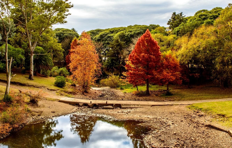 Photo wallpaper Nature, Bridge, Autumn, Trees, River, Park, Uruguay, Minas, Lavalleja