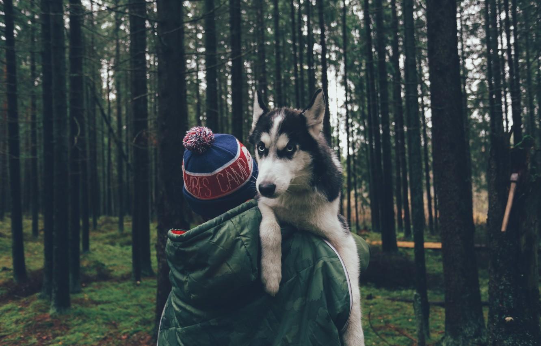 Photo wallpaper forest, trees, hat, dog, guy, husky