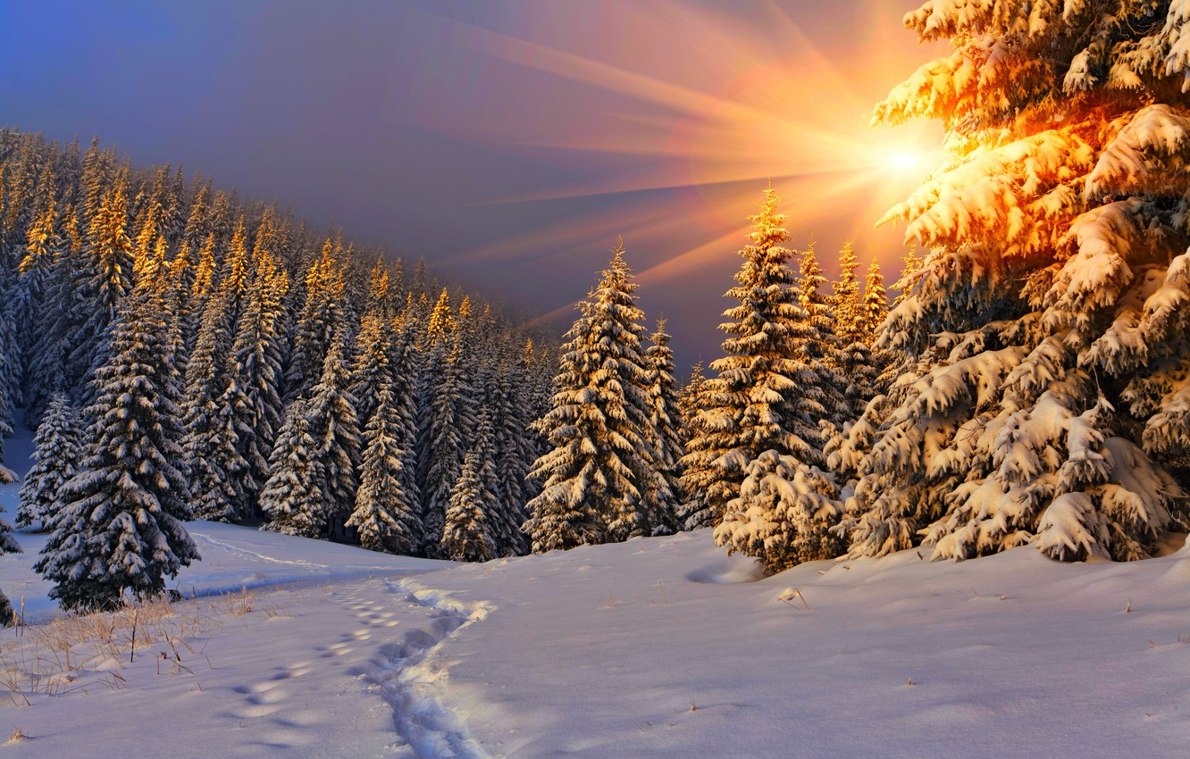 Photo wallpaper winter, the sky, snow, landscape, nature, white, forest, road, sky, nature, sunset, beautiful, winter, snow, …