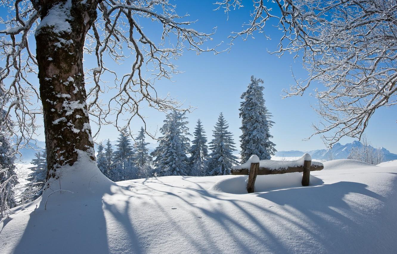 Photo wallpaper winter, snow, landscape, tree, beauty, bench