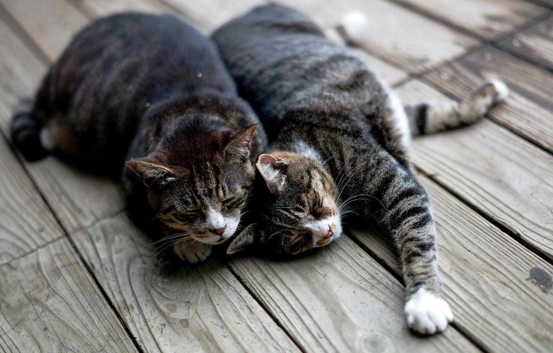 Photo wallpaper cats, cats, Board, sleep, lie, striped