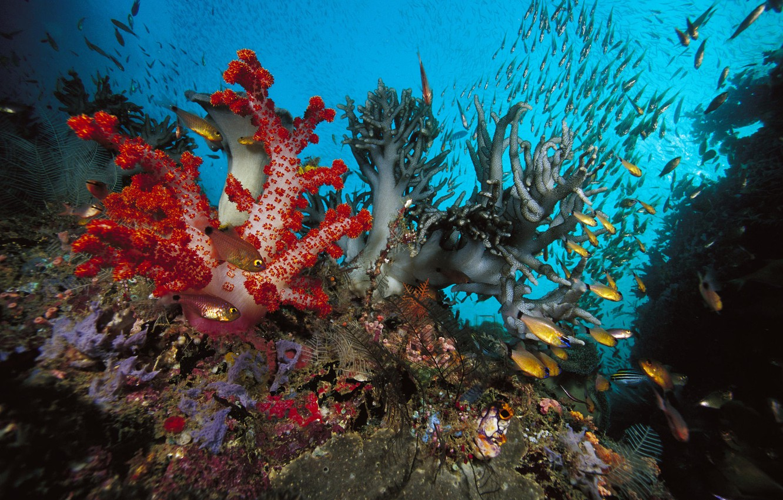 Photo wallpaper fish, algae, corral