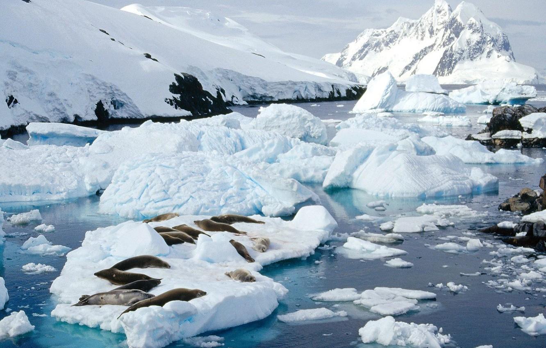 Photo wallpaper ice, snow, Seals